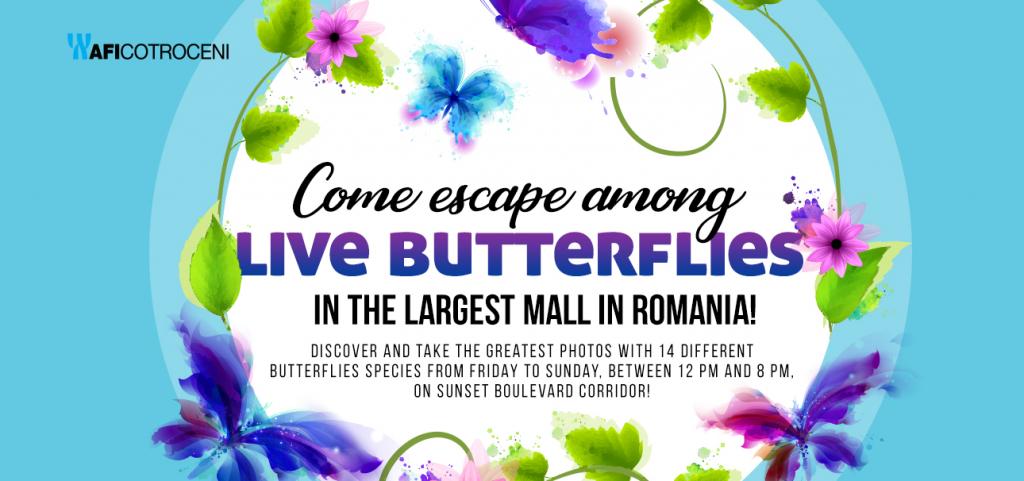 Live Butterflies